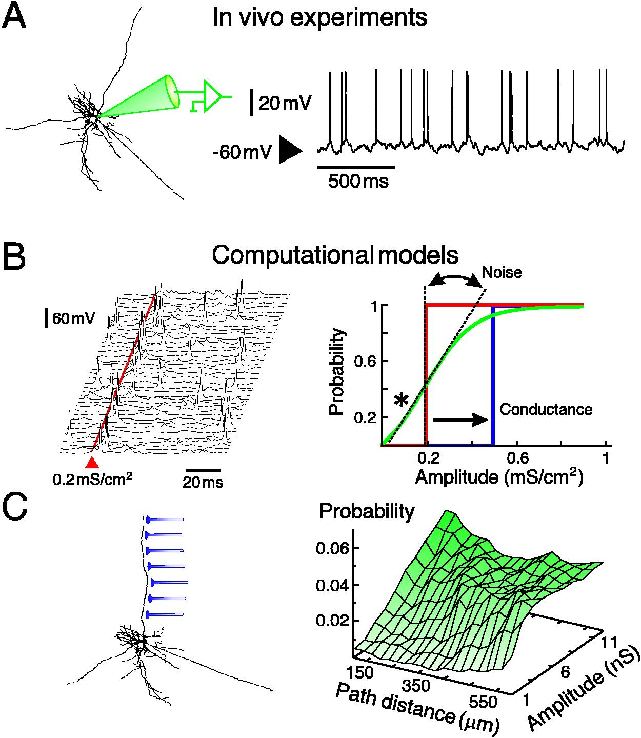 The integrative properties of cortical neurons in vivo figure 1 modulation of integrative properties of neocortical neurons by synaptic noise a intracellular recording of a neuron from cat parietal cortex pooptronica Gallery